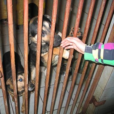 Tuga u azilu za pse